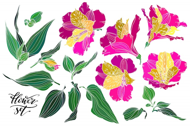 Vector collection of hand drawn plants as design elements.
