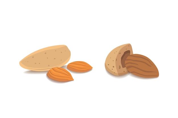 Векторная коллекция мультяшного изолированного миндаля. здоровые орехи вегетарианская еда плоский