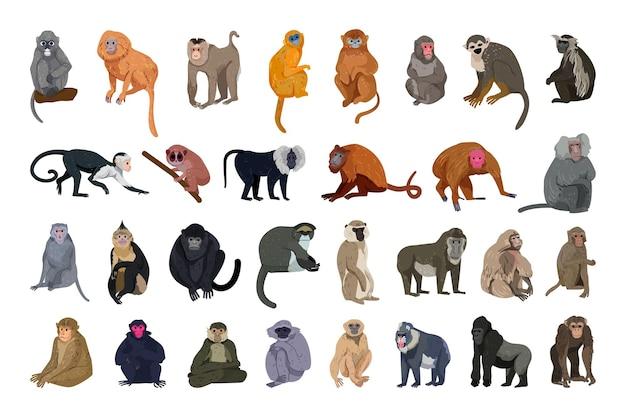 Векторная коллекция обезьян в подробном стиле.
