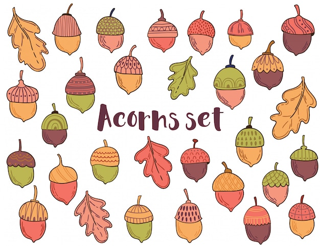 Vector collection with acorns and leaves