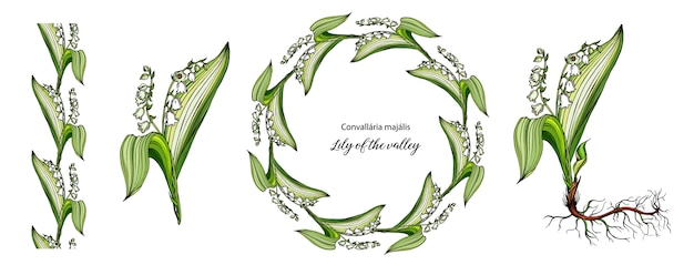 Vector color floral lily of the valley flowers set