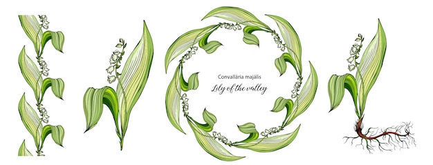 Vector color floral lily of the valley flowers set.