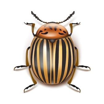 Вектор колорадский жук крупным планом вид сверху, изолированные на белом фоне