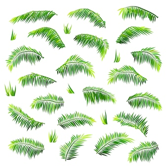 Vector colored palm leaves set isolated on white