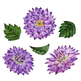 ベクトルダリアの花手描き花イラスト植物要素白で隔離
