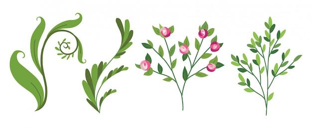 ベクトルデザイナーの要素セット緑の森のシダのコレクション