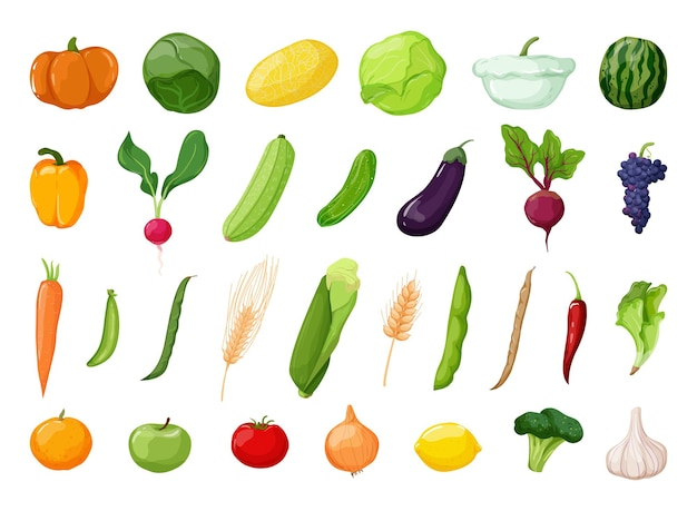 Vector detailed vegetables and fruits