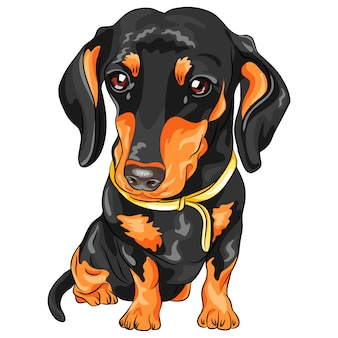 Vector dog dachshund