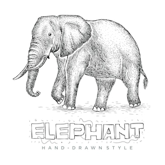 Vector elephant walking, realistic illustration of a hand drawn animal