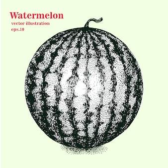 Vector engraving illustration of highly detailed hand drawn isolated watermelon. retro style