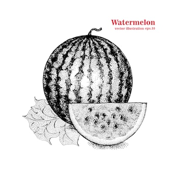 Vector engraving illustration of highly detailed hand drawn watermelon and slice. retro style