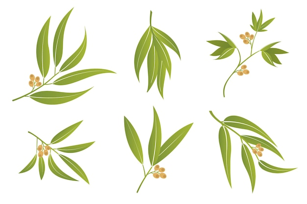 벡터 유칼립투스 분기와 나뭇 가지 녹색 잎 흰색 배경에 고립 된 열매와 함께 설정