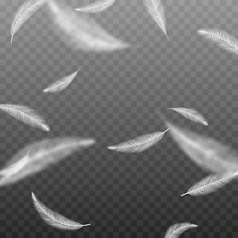 Vector feathers on an isolated transparent background falling feathers png flying feathers png