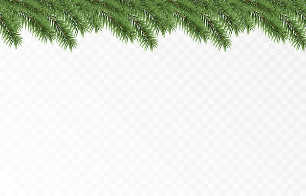 Vector fir branches spruce branches png pine spruce christmas decorations christmas background