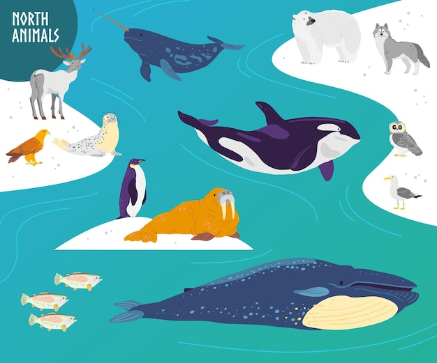 벡터 플랫 손으로 그린 북쪽 동물, 새, 물고기: 북극곰, 올빼미, 고래, 펭귄. 눈과 물이 있는 북부 풍경. 배너, 동물원 일러스트레이션, 로고, 카드, 어린이 알파벳, 인쇄용.