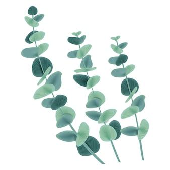 Vector floral design: eucalyptus leaves