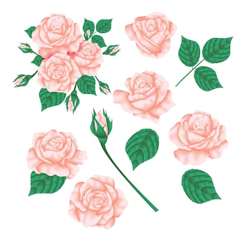 Vector floral design: garden pink peach rose flower