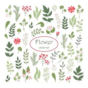 Векторный цветочный набор с растениями и цветами