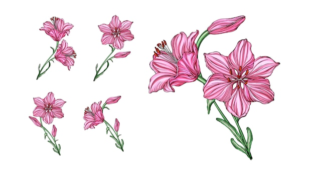Vector flower arrangements with lily flowers