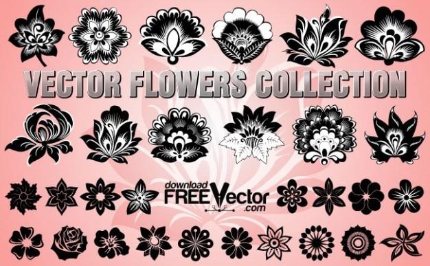 ベクトルの花の蕾