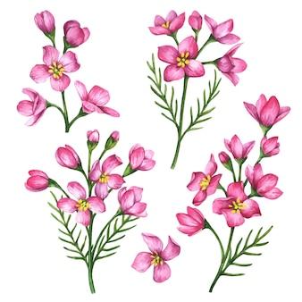 Векторные цветы набор рисованной цветочные иллюстрации, изолированные на белом фоне