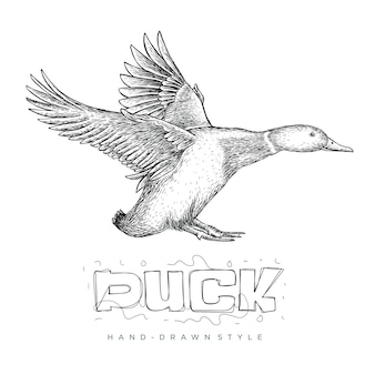 Vector of a flying duck, hand drawn animal illustration