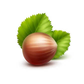 Vector full unpeeled realistic hazelnut with leaves on white