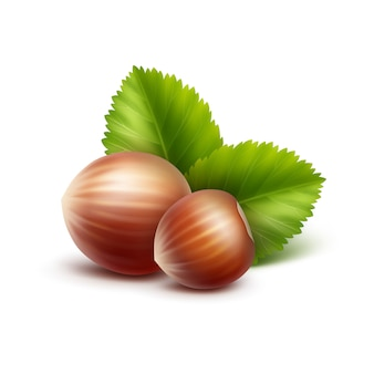 Vector full unpeeled realistic hazelnuts with leaves on white
