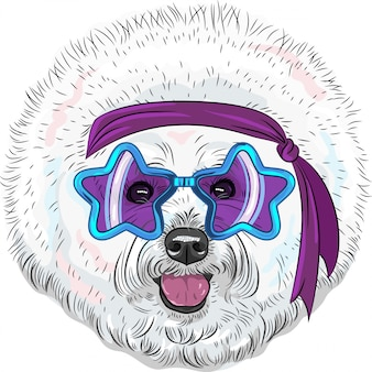Vector funny cartoon hipster dog bichon star disco
