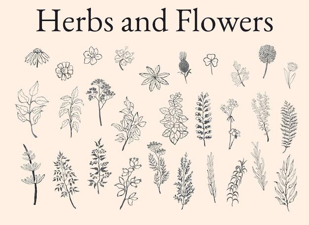 허브 식물과 꽃의 벡터 회색조 그림 세트