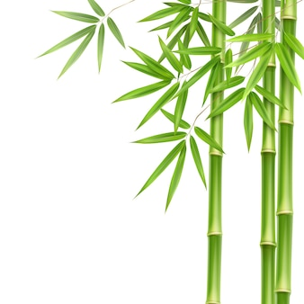 Vector green bamboo stems and leaves isolated on white background with copy space