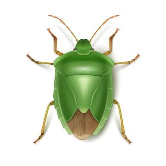 ベクトル緑のカメムシは、白い背景で隔離の上面図をクローズアップ