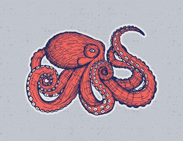 Vector hand drawing design with an octopus isolated from background.