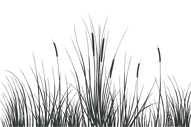 Vector hand drawing sketch with reedsillustration of black and white reeds