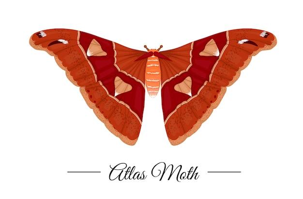 Вектор рисованной цветной тропический атлас моли изолированы. бабочка иллюстрации.