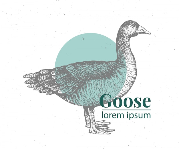 Vector hand drawn goose illustration.