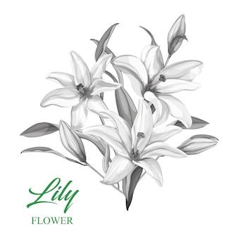 ベクトル手描きの葉とモノクロのユリの花束
