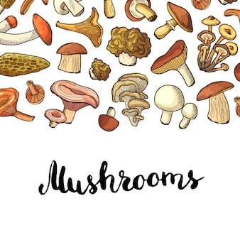 Vector hand drawn mushrooms background.