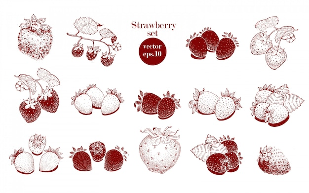 Vector hand drawn strawberry set. can be use for background, design, invitation, banner, cover. retro hand drawn illustrations
