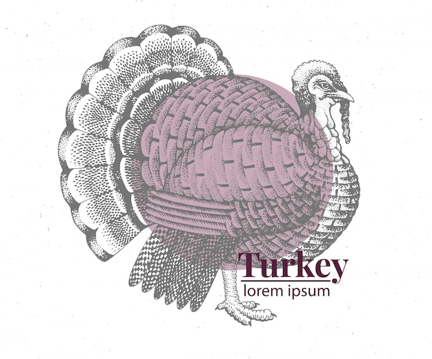 Vector hand drawn turkey illustration.