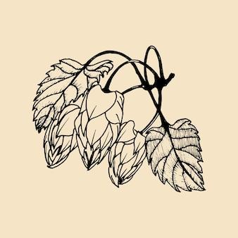 벡터 손으로 홉의 그림을 스케치했습니다. 양조장 허브 디자인입니다. 손으로 스케치한 맥주 이미지.
