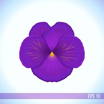 Vector head of violet viola flower