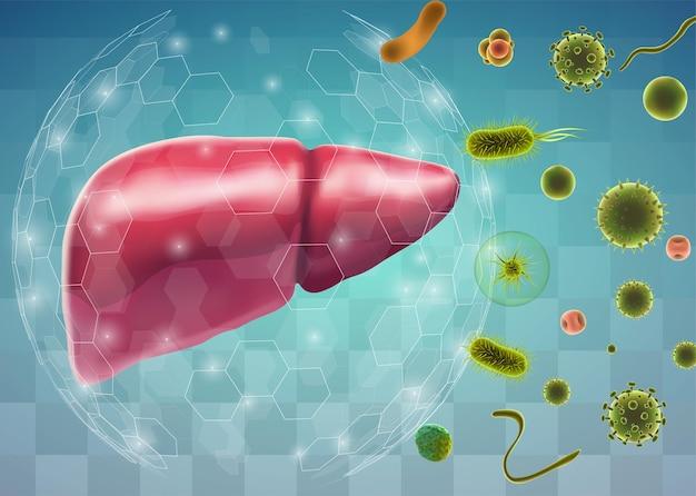 벡터 인간의 간, 약물 및 의료 뉴스에 대한 체적 3d 기관