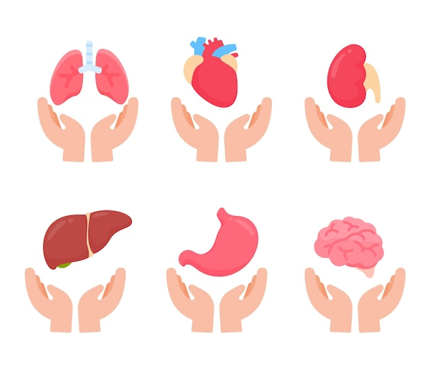Vector human organs. human body internal parts concept of study of body systems.