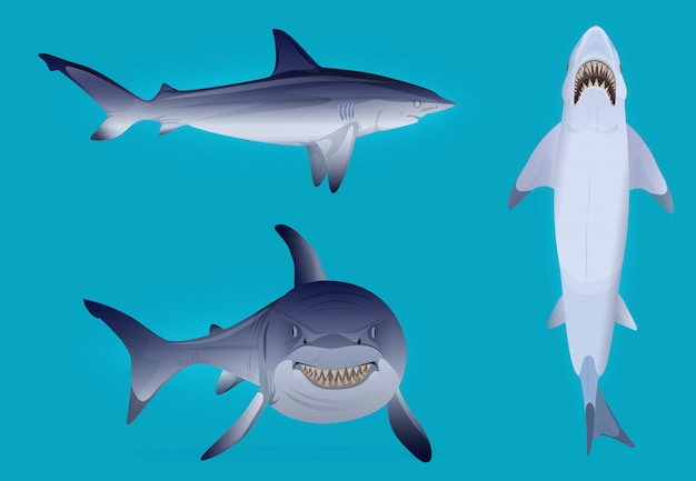 Vector hungry agressive and scary shark fish silhouette set.