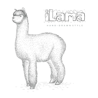Vector ilama in hand drawn style, realistic animal illustrations