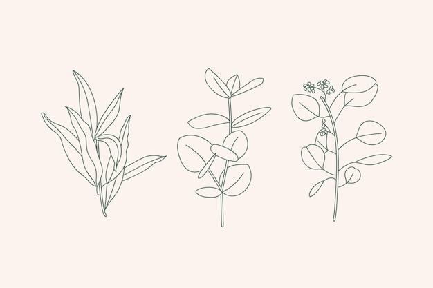 흰색 배경에 격리된 잎이 있는 다양한 유칼립투스 가지의 벡터 illustratio 컬렉션 아이콘입니다. 식물 디자인 요소입니다.