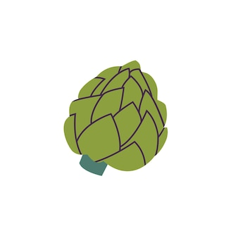 Vector illustration of artichoke - green vegetabl isolated on white background.