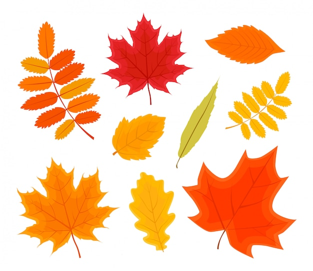 Vector illustration of autumn forest leaves set isolated on white background.