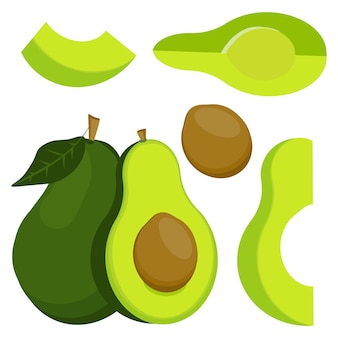Vector illustration of avocado. whole and sliced avocado, isolated on a white background.